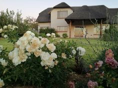 South Africa, Floral Wreath, Houses, Wreaths, Home Decor, Homes, Floral Crown, Decoration Home, Door Wreaths