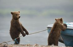 You gonna help us or just stand there? | Bears Doing Human Things