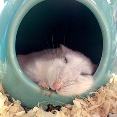 This napping marshmallow: | 16 Tiny Fluffs That Will Warm Even The Coldest Heart