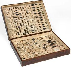 Darwin's beetle collection