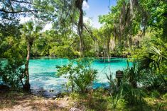 Silver Glen Springs, Ocala: The Natural Swimming Hole In Florida That Will Take You Back To The Good Ole Days Florida Travel, Florida Trips, Florida Vacation, Florida Events, Vacation Spots, Vacation Ideas, Florida Camping, Beach Camping, State Parks