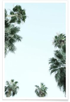 Palm Springs as Premium Poster by Shot By Clint | JUNIQE