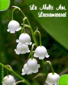 Felicitare de Florii cu mesajul La multi ani, Lacramioara!