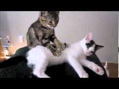 Funny Cats  (YouTube)