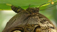Thema: bloempjes en bijtjes. Solitaire bijen versus honingbijen, insectenhotels.