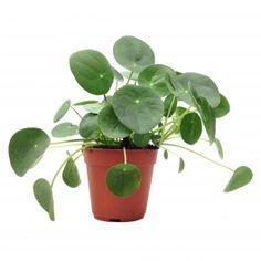 untitled plants pinterest planten en bloemen. Black Bedroom Furniture Sets. Home Design Ideas