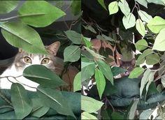"""Puss"" and ""P2"" from Trinidad enjoying their Fantasy Tree"