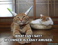 funny cat memes i may be schizophrenic but at least i