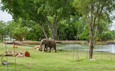 Great Zoo Exhibit: Elephants of the Zambezi River Valley