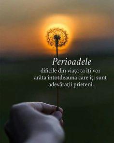 Dandelion, Celestial, Flowers, Plants, Poster, Outdoor, Outdoors, Dandelions, Plant