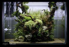 Drift wood and plants