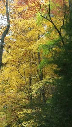 Roaring Fork Nature Trail