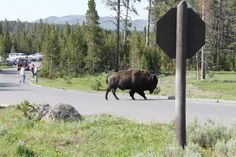 HE DIDN,T CARE WHICH WAY WE WANTED TO GO. IT IS HIS ROAD. YELLOWSTONE