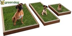 Housebreaking tips of why dog pads should be the only solution to owning a dog? House Breaking A Puppy, Indoor Dog Potty, Training Your Dog, Potty Training, Toilet Training, Dog Toilet, Dog Pads, Puppy House, Dog Cleaning
