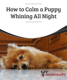 how to break a puppy from whining