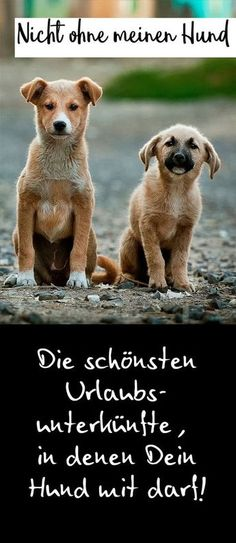 Entdecke tolle Urlaubsunterkünfte für Deinen Urlaub mit Hund! #urlaubmithund #hundeurlaub #hund