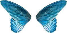 wing-ala-krah--kanat--asa-butterfly-mariposa-Schmetterling-kelebek---borboleta5_zps4d33b85d.png