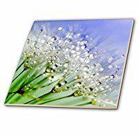 Sven Herkenrath Flower - Dandelion Flower - 6 Inch Glass Tile (ct_233977_6)