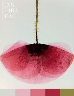 Flor | Anêmona