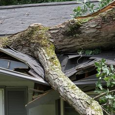 We provide emergency tree storm damage services in Fairfax VA, Which is fast, insured, affordable & reliable. Call us to get our service or visit our website now! Roofing Services, Roofing Contractors, Solar Panel Installation, Solar Panels, Emergency Roof Repair, Dog Bathroom, Cool Roof, Tampa Bay Area, Highland Homes