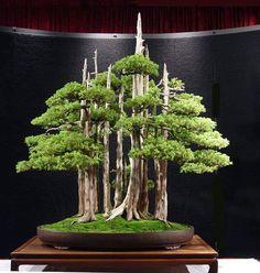 Les plus beau bonsai.