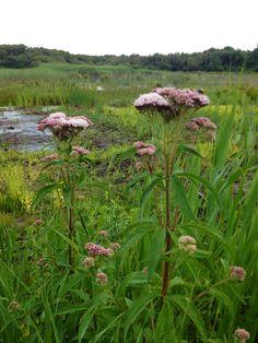 Prachtige flora op Schiermonnikoog. Helemaal leuk met een boswachter die je er van alles over weet te vertellen.