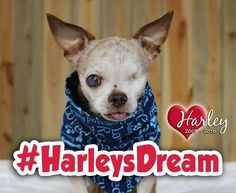 What's Harley's Dream? Get to know the Org's namesake and mission