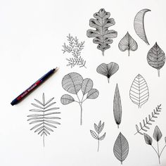 Leaf drawing, plant drawing, botanical line drawing, botanical drawings, ca Botanical Line Drawing, Botanical Drawings, Leaf Drawing, Plant Drawing, Tree Illustration, Botanical Illustration, Leaves Doodle, Drawing Projects, Simple Doodles