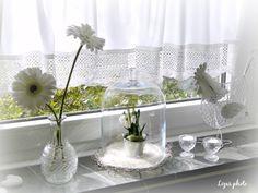 Frühlingssonne auf der Fensterbank