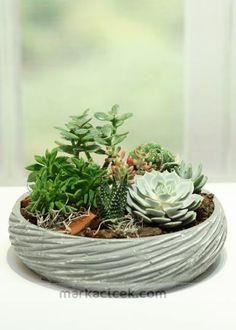 Küçük Bahçem  https://markacicek.com/cicek-gonder/kucuk-bahcem-mr849.html