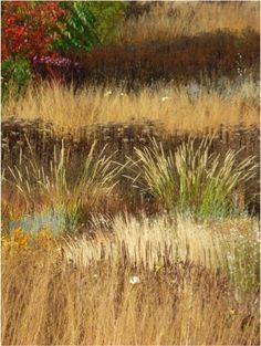 Grasses Wisley