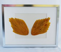 Framed Mustard Feathers.