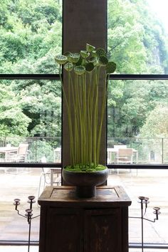 CNFlower西恩凌宗湧暨團隊們擔任植物設計及花藝設計,隨著陽朔的四季變化,運用廣西在地的材料,順應自然、就地取材,將ALILA 陽朔糖舍酒店融入自然, 呈現出最與眾不同的新東方花藝美學。 Vase Arrangements, Beautiful Flower Arrangements, Beautiful Flowers, Flower Planters, Flower Vases, Flower Art, Cactus Flower, Ikebana, Flower Centerpieces
