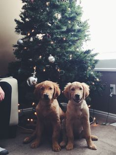 Hoping you had a very  Merry Christmas from Zion & Zoey
