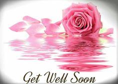 Get well rose