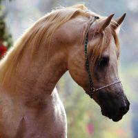 Stwórz swoją własną stadninę koni!