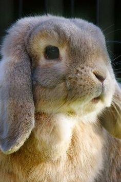 Bunny portrait...