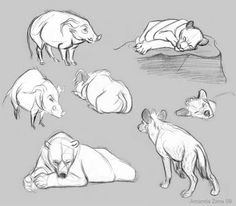 Amanda's Drawing Blog: zoo number two