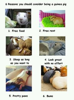Some good reasons! :)