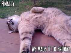 "19 Likes, 2 Comments - Flex Seal (@flexseal) on Instagram: ""It's that #FridayFeeling"""