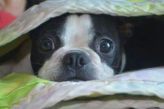 BT I love being under a blanket