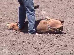 Rodeo Thugs Abuse & Injure Calf in Garden City, Kansas