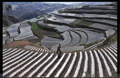 Impresionantes Campos de Arroz en China