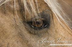 Bolder's Eye  Fine Art Wild Horse Photograph by Carol Walker www.LivingImagesCJW.com