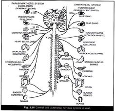 10 best the nervous system images