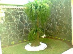 Pata de elefante bonsai pata de elefante planta pinterest - Planta pata de elefante ...