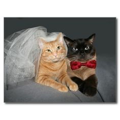 =>quality product          	Feline bride and groom postcard           	Feline bride and groom postcard Yes I can say you are on right site we just collected best shopping store that haveThis Deals          	Feline bride and groom postcard lowest price Fast Shipping and save your money Now!!...Cleck Hot Deals >>> http://www.zazzle.com/feline_bride_and_groom_postcard-239667433744793158?rf=238627982471231924&zbar=1&tc=terrest