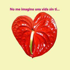 Mejores 38 Imagenes De Frases De Amor En Pinterest Quotes Love