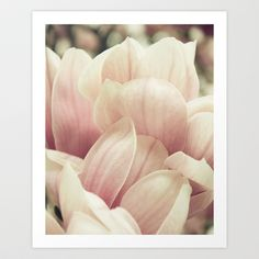 Magnolia Tree Blooms. Pink Flower Photography Art Print by Christina K. Klausen  - $19.00