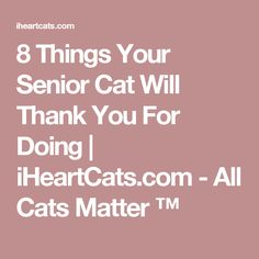 8 Things Your Senior Cat Will Thank You For Doing | iHeartCats.com - All Cats Matter ™